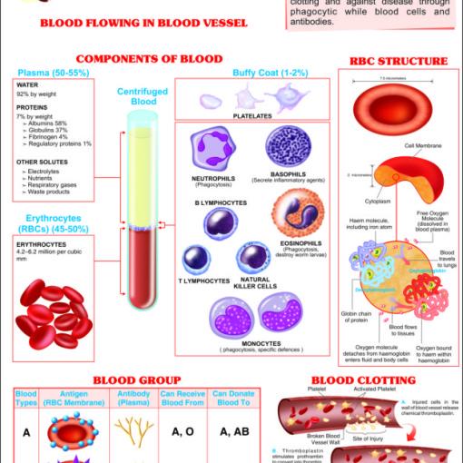 blood chart
