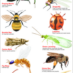 65-597 BENEFICIAL INSECTS
