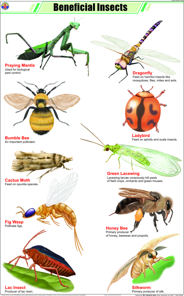 Beneficial Insects Charts Beneficial Insects Charts